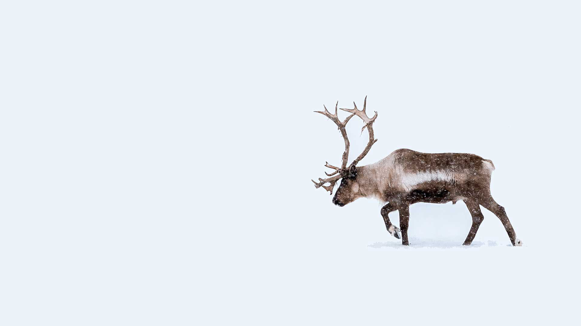 Neon Reindeer Marketing, Health & Wellbeing Marketing Consultant